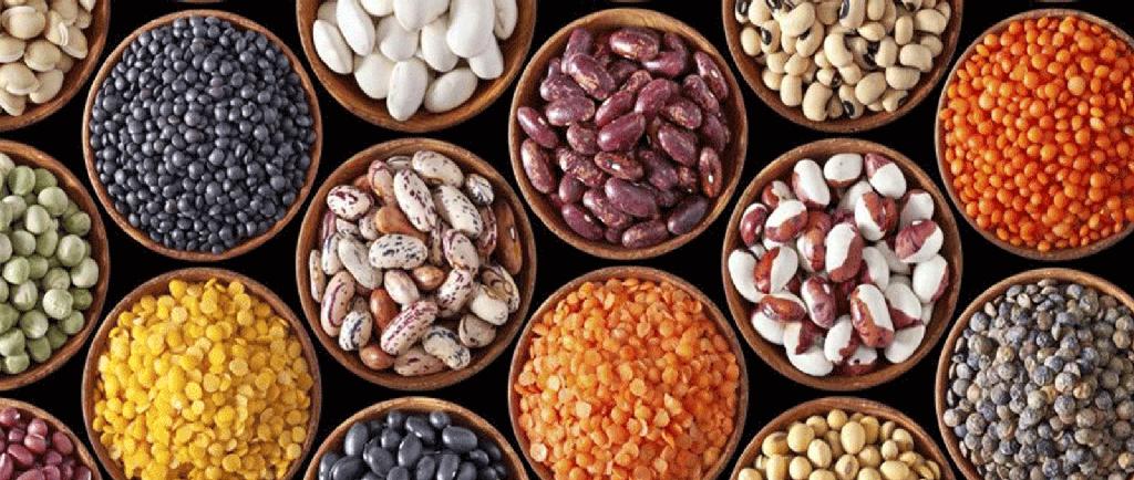 دانه های مورد استفاده در تغذیه عروس هلندی