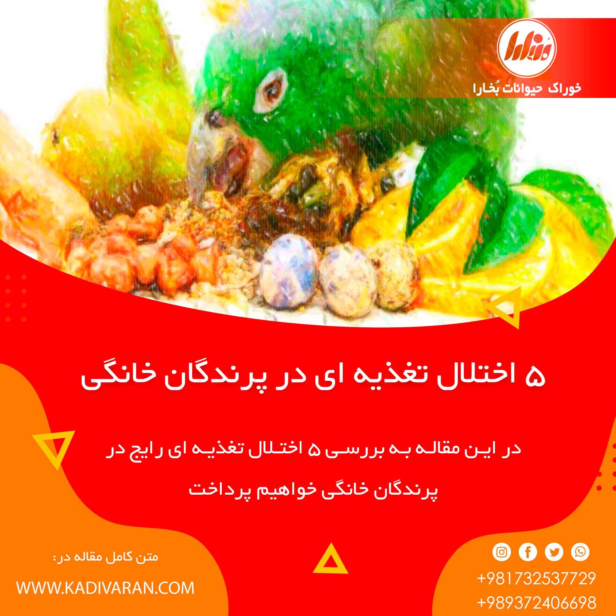 5 اختلال تغذیه ای رایج در پرندگان خانگی