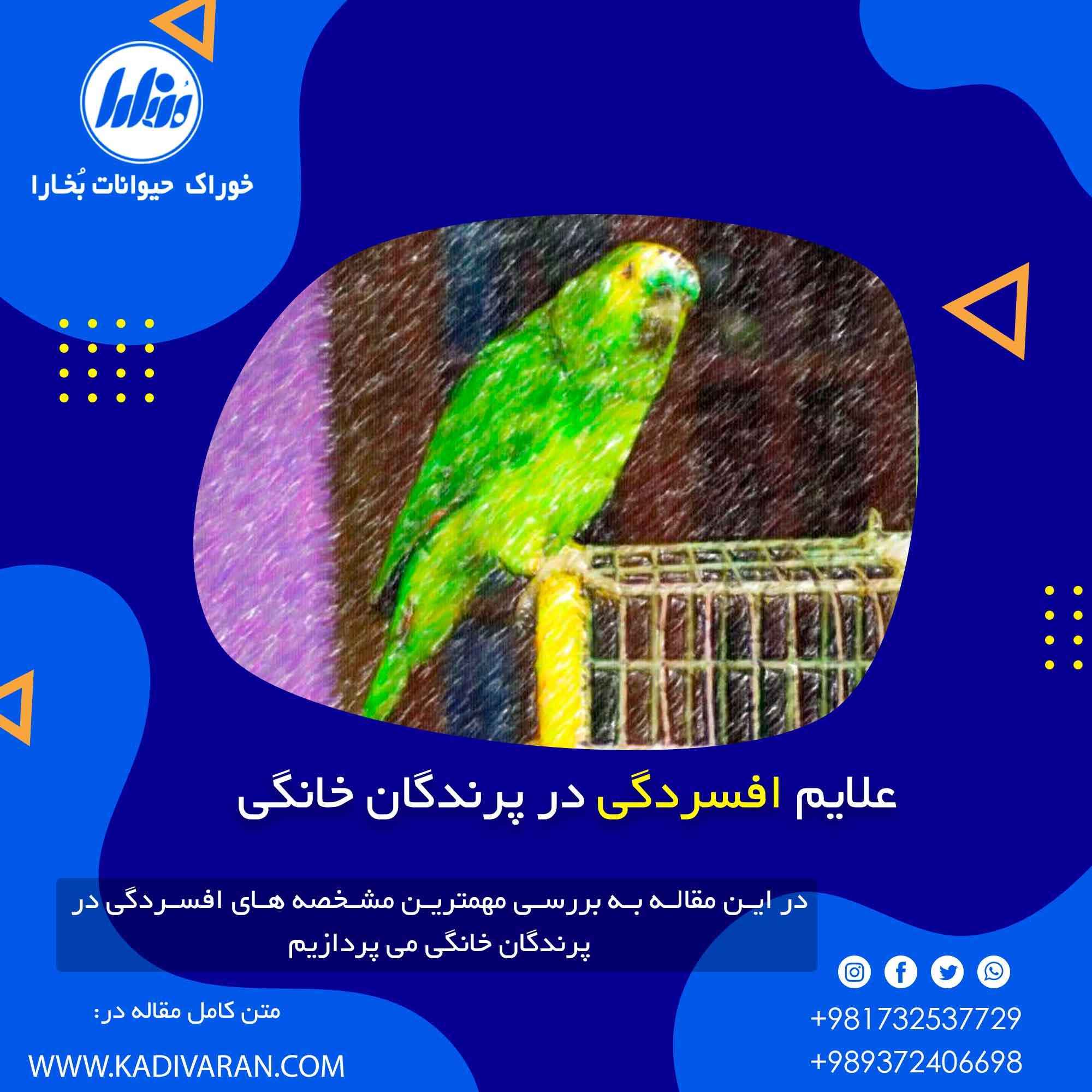 علایم افسردگی در پرندگان خانگی