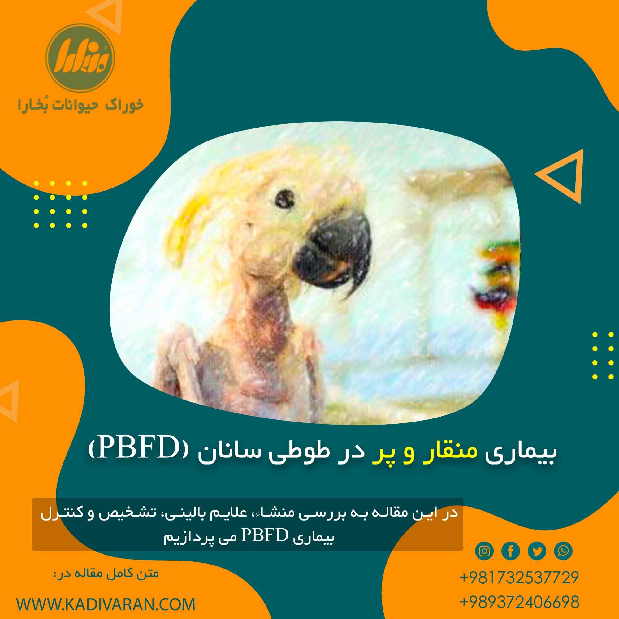 بیماری منقار و پر طوطی سانان (PBFD)